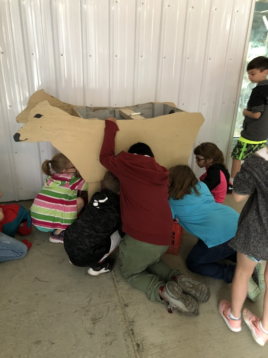 Practicing milking a cow!